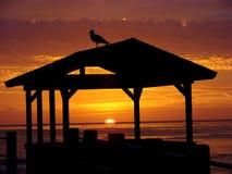 观看日落的鸥在拉霍亚 库存图片