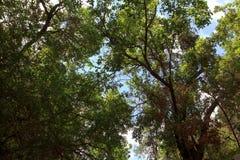 观看森林的里面树的 免版税库存照片
