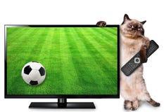 观看橄榄球赛的聪明的电视翻译的猫 免版税库存照片