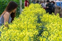 观看油菜的领域旅客在有机庭院里美妙地开花绽放 库存照片