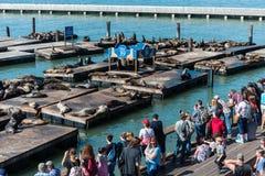 观看海狮的人们在码头39在旧金山,加利福尼亚,美国 库存照片
