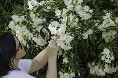 观看白色夹竹桃花的博物学家 免版税库存图片