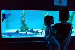 观看的鲨鱼 库存照片