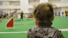 观看纯血统狗竞争,关于宠物的梦想,对动物的爱的小女孩 股票视频