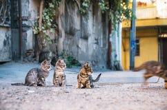 观看象小猫的三只街道小猫跑掉 免版税库存照片