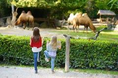 观看骆驼的两个逗人喜爱的妹在动物园里在温暖和晴朗的夏日 观看动物园动物的孩子支持市分 库存图片