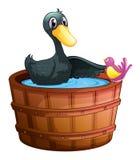 观鸟在桶上的鸭子 库存照片