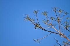 观鸟在森林里 免版税库存照片