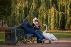 观鸟在海德公园,伦敦在秋天 图库摄影