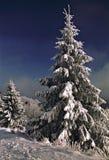 视图冬天 免版税图库摄影