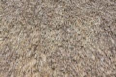视图的接近的芦苇茅草屋顶 免版税库存图片