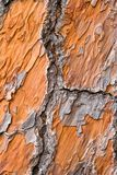 视图的b接近的橙色杉木 库存图片