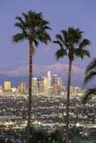 视图通过洛杉矶地平线棕榈树  免版税库存图片