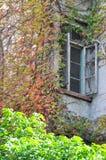视窗和颜色叶子 免版税库存照片