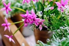 视窗和flowerbox 在窗口的花在一个清楚的晴天 免版税库存图片