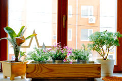 视窗和flowerbox 在窗口的花在一个清楚的晴天 库存照片
