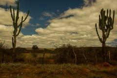 视觉特点sertão,巴西沙漠 免版税图库摄影