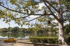 幻觉盐水湖, tomas garrido canabal公园比利亚埃尔莫萨,塔巴斯科州,墨西哥 免版税库存照片