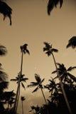 角度低棕榈树 库存图片