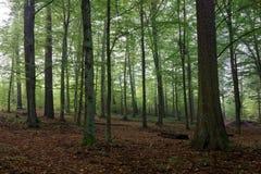 角树光早晨橡树 库存图片
