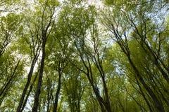 角树森林 图库摄影