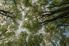 角树森林 库存图片