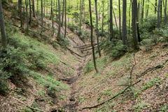 角树森林 免版税图库摄影