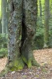 角树森林 免版税库存照片