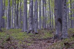 角树森林- 03 库存照片