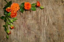 角落由与叶子的玫瑰做成 免版税图库摄影