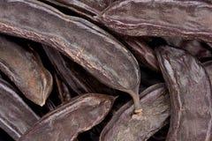 角豆树荚(Certonia长角) 免版税库存图片