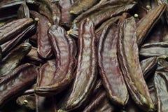 角豆树(长角豆属长角) 免版税库存图片