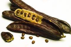 角豆树(长角豆属长角) 库存照片