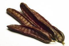 角豆树(长角豆属长角) 免版税库存照片