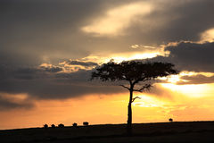 角马日落马塞人玛拉储备在肯尼亚非洲 库存照片