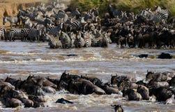 角马穿过玛拉河 巨大迁移 肯尼亚 坦桑尼亚 马塞人玛拉国家公园 库存照片