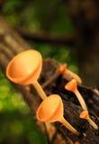 觚蘑菇 免版税库存图片