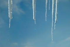 解冻滴水的雪 免版税库存图片