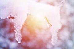 解冻的雪细节在树干的 免版税库存图片