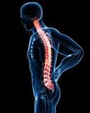 解剖学蓝色男性痛苦脊椎 库存照片