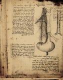 解剖学 免版税图库摄影