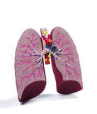 解剖肺设计 库存照片