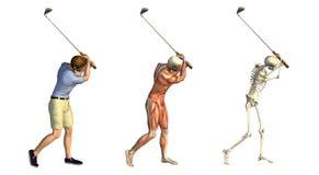 解剖高尔夫球重叠摇摆 免版税库存图片