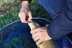 解开一条鱼 免版税库存图片