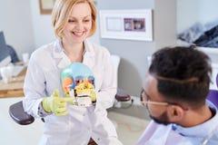 解释牙结构的女性牙医 免版税库存照片