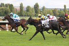 詹妮女孩-赛马在布拉格 库存图片