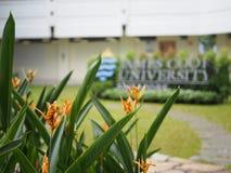 詹姆士库克大学新加坡 免版税库存图片