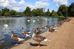 詹姆斯・伦敦公园s st 库存图片