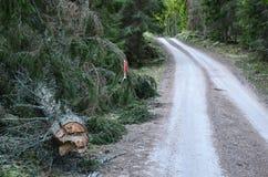 警告在路旁的一棵下落的云杉的 库存图片