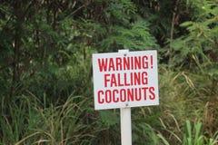 警告的落的椰子 免版税库存图片